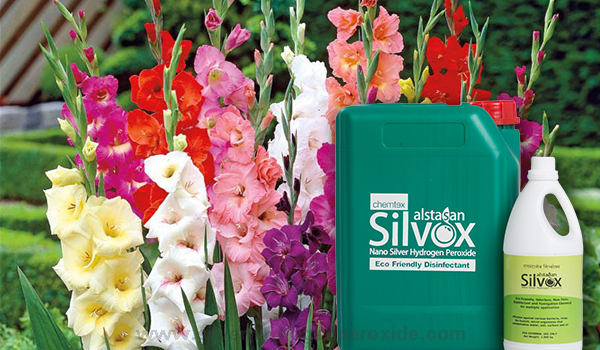Gladiolus_Cultivation_Disinfection11.jpg