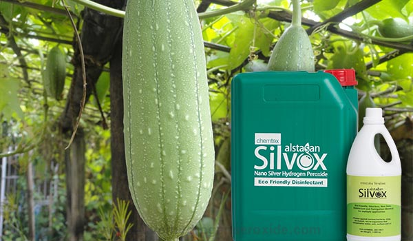 Gourd_Cultivation_Disinfection1.jpg