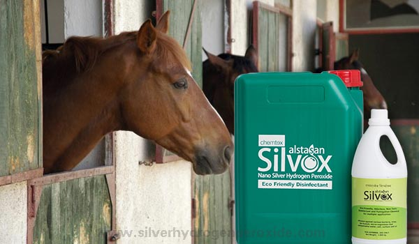 Horse_Stable_Disinfection1.jpg