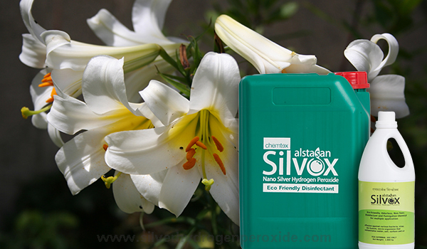 Lily_Cultivation_Disinfection11.jpg