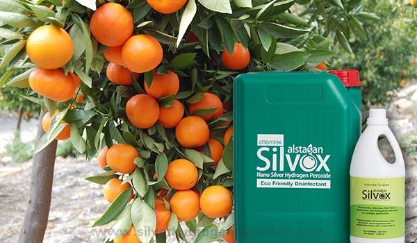 Orange_Cultivation_Disinfection1.jpg