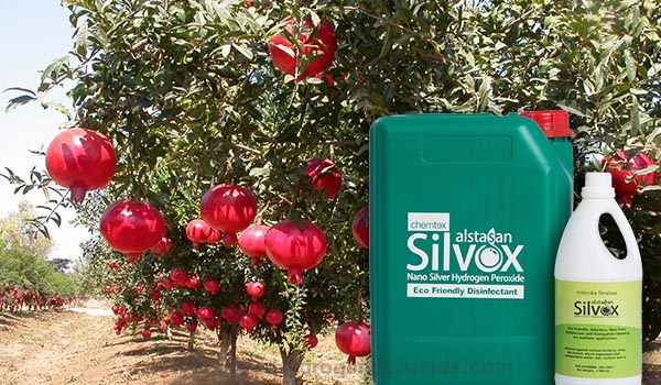 Pomegranate_Cultivation_Disinfection1.jpg