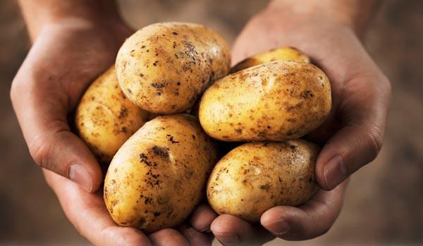 Potato_Cultivation_Disinfection.jpg