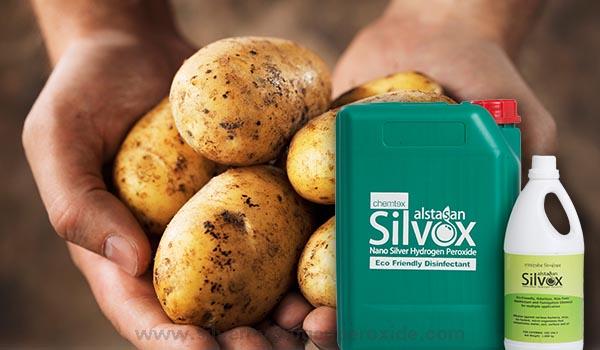 Potato_Cultivation_Disinfection1.jpg