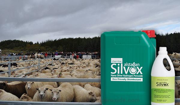 Sheep_Pen_Sanitation11.jpg