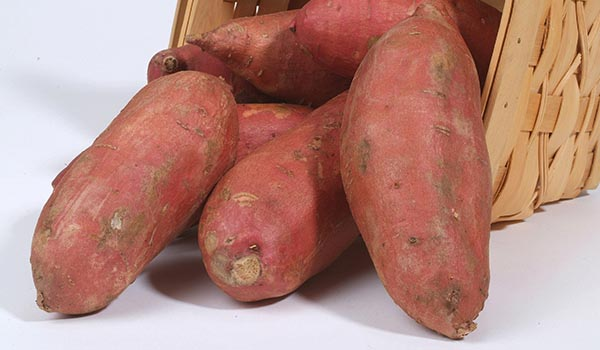 Sweet_Potato_Cultivation_Disinfection.jpg