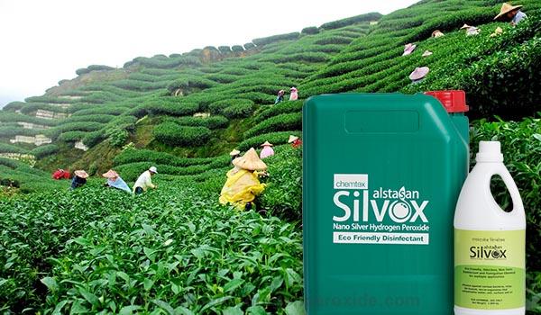 Tea_Plantation_Sanitation1.jpg