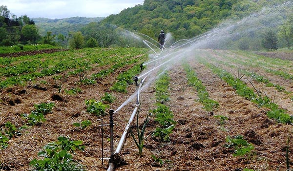 irrigation_water_disinfection.jpg